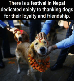 Dogs, Nepal, and Festival: There is a festival in Nepal  dedicated solely to thanking dogs  for their loyalty and friendship. A special day, just for doggos