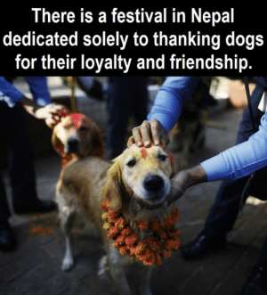 Dogs, Memes, and Nepal: There is a festival in Nepal  dedicated solely to thanking dogs  for their loyalty and friendship. https://t.co/FAnRuq06J6