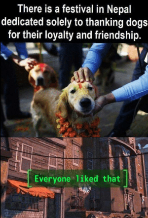 Dogs, Nepal, and Festival: There is a festival in Nepal  dedicated solely to thanking dogs  for their loyalty and friendship.  Everyone liked that Nepal knows who is the most important