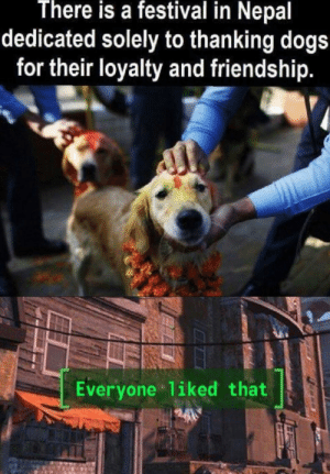 Dogs, Good, and Nepal: There is a festival in Nepal  dedicated solely to thanking dogs  for their loyalty and friendship.  Everyone 1iked that Good boy