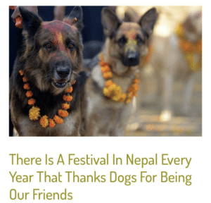 Thank you friend!: There Is A Festival In Nepal Every  Year That Thanks Dogs For Being  Our Friends Thank you friend!