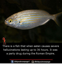 Empire, Memes, and Party: There is a fish that when eaten causes severe  hallucinations lasting up to 36 hours. It was  a party drug during the Roman Empire  /didyouknowpagel @didyouknowpage