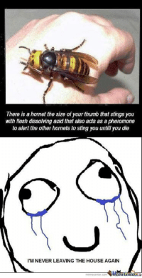 I'm never leaving the house again.