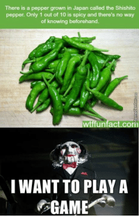 Here's something fun to do..: There is a pepper grown in Japan called the Shishito  pepper. Only 1 out of 10 is spicy and there's no way  of knowing beforehand.  act com  I WANT TO PLAY A  GAME Here's something fun to do..