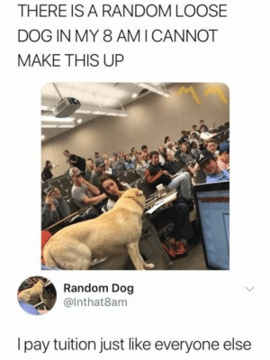 22 Funny Animals That Made Us LOL #boredomkills #lol #memes #funny #funnyanimals #funnydogs: THERE IS A RANDOM LOOSE  DOG IN MY 8 AMI CANNOT  MAKE THIS UP  Random Dog  @Inthat8am  Ipay tuition just like everyone else 22 Funny Animals That Made Us LOL #boredomkills #lol #memes #funny #funnyanimals #funnydogs