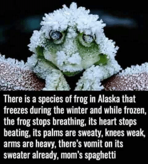 He's nervous: There is a species of frog in Alaska that  freezes during the winter and while frozen,  the frog stops breathing, its heart stops  beating, its palms are sweaty, knees weak,  arms are heavy, there's vomit on its  sweater already, mom's spaghetti He's nervous