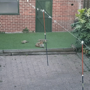 """""""There is a whole family of foxes living in our garden!"""" 😂: """"There is a whole family of foxes living in our garden!"""" 😂"""