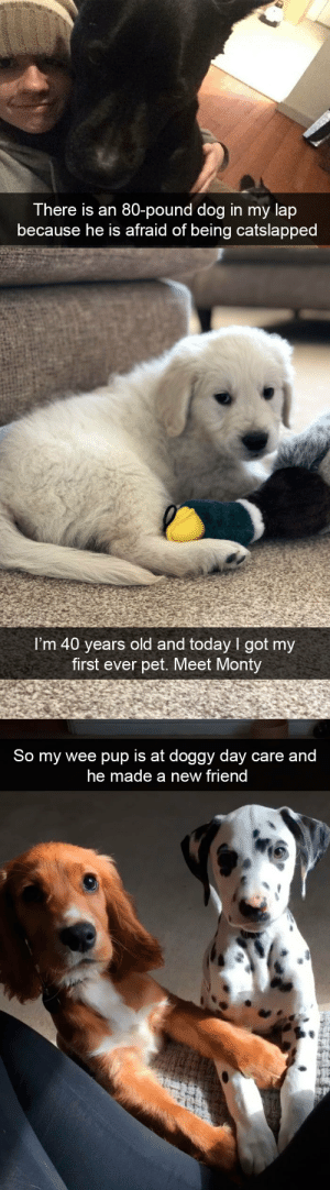 Target, Tumblr, and Wee: There is an 80-pound dog in my lap  because he is afraid of being catslapped   I'm 40 years old and today I got my  first ever pet. Meet Monty   So my wee pup is at doggy day care and  he made a new friend More dog snapsvia @animalsnaps