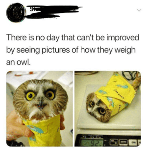 Pictures, Boy, and How: There is no day that can't be improved  by seeing pictures of how they weigh  an owl. Lil burrito boy