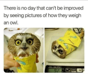 Aww Im melting: There is no day that can't be improved  by seeing pictures of how they weigh  an owl.  92. Aww Im melting