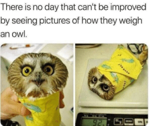 Can't be improved: There is no day that can't be improved  by seeing pictures of how they weigh  an owl.  92. Can't be improved
