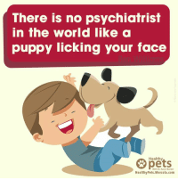 When you're feeling down, they will always be there to support you! :): There is no psychiatrist  in the world like a  puppy licking your face  Healthy  pets  With Dr. Karen Becker  HealthyPets.Mercola.com When you're feeling down, they will always be there to support you! :)