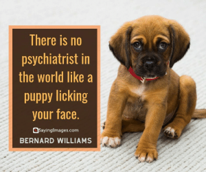 Love, Quotes, and World: There is no  psychiatrist in  the world like a  uddy licking  your face.  Sayingimages.com  BERNARD WILLIAMS 30 Pet Quotes on Love That Has No Boundaries #sayingimages #petquotes #quotes