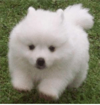 there is no text on this image because this shoobie dog is not yet old enough to possess speech skills.: there is no text on this image because this shoobie dog is not yet old enough to possess speech skills.