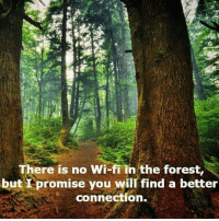 Comfortable, Complex, and Memes: There is no Wi-fi in the forest,  but I promise you will find a better  connection. So now many of us live in a parallel world, right next to the world of which we were born... Before the Internet became a place to live. Our children young, unborn & growing will never know the world we grew up in because technology changed it. This technology is such an integral part of our lives, that is literally shaping our conscious existences. All of these computers are based on brains without empathetic neurones. So they can't love, yet soon the Artificial intelligence will rule the world & we will celebrate them as products of our own trivial creation. This is what we are calling success, capitalism, materialism, pseudo intellectual religions run by males who want to control females, as they destroy the feminine energy within themselves, all for profit based on the suffering of Mother Nature & her inhabitants. What happened to knowledge? All I see is spiritually devoid technologies. The more I read the more complex the human seems, & the more I fear that destruction is inevitable. We aren't all going to make it. People are so disconnected from source & spirit that they murder themselves through food, poisons & self loathing. Let alone those who perpetuate structural violence, masturbating their self entitlement. Right now I can't see an end to this downward spiral of evil evolving, apart from an uninhabitable planet, as mother will cleanse herself of our egos & neglect for her... We belong to her, not the other way around. I look into a child's eyes & see such beauty, hopeful love & dependancy on reciprocal love. All I can do is hope, spread love&resistance to those fighting spiritual battles, those who seek to kill everything for a profit that they can't take with them, all the while we worship prophets that they will try to take out. We continue to celebrate the dead, some of us live in comfort based on the suffering of others, while others suffer until they return to the spirit world, maybe retiring there forever, maybe returning to this world to try & create positive change. I'm not sure what the future holds for my unborn children, but I will try to make it beautiful. Rest assured you can live & die on the internet, but I'll try not to chakabars