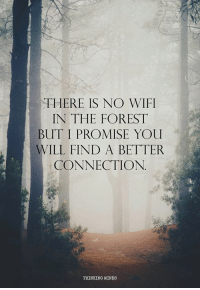 Memes, Wifi, and 🤖: THERE IS NO WIFI  IN THE FOREST  BUT I PROMISE YOU  WILL FIND A BETTER  CONNECTION.  THINKING MINDS