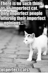 Memes, 🤖, and Cat: There no such thing  as an  imperfect cat.  Only imperfect people  offering their imperfect  opinions.  of perfect cats. For more cute pics LIKE us at The Purrfect Feline Page