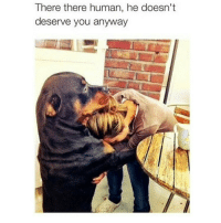 Memes, 🤖, and Dog: There there human, he doesn't  deserve you anyway Can my dog do this? 😂