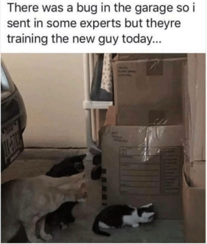 Always train the new guy via /r/funny https://ift.tt/2w1gqPE: There was a bug in the garage so i  sent in some experts but theyre  training the new guy today... Always train the new guy via /r/funny https://ift.tt/2w1gqPE