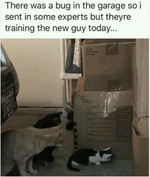 Cute intern.. by somu69 MORE MEMES: There was a bug in the garage so i  sent in some experts but theyre  training the new guy today... Cute intern.. by somu69 MORE MEMES