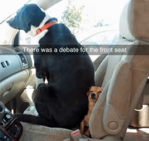 Reddit, Tumblr, and Blog: There was a debate for the front seat  to klubbhead:  tastefullyoffensive: (via GeauxTiger)