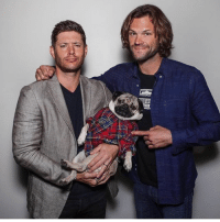 Memes, Comic Con, and Supernatural: There WAS a SUPERNATURAL TEASER at comic con but it's 5 minutes and is literally just a recap of everything we already know. I can still post it if you'd like