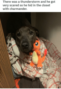 scared: There was a thunderstorm and he got  very scared so he hid in the closet  with charmander.