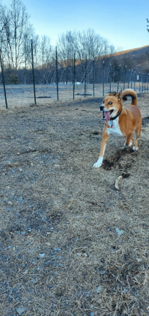 There was freak warm weather today, so we capitalized and went to the dog park. Taking a break from the winter blues.: There was freak warm weather today, so we capitalized and went to the dog park. Taking a break from the winter blues.