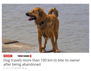This could be a good movie via /r/funny https://ift.tt/2Dw6wtN: THEREISNEWs com  INCIDENTS  Dog travels more than 100 km to bite its owner  after bein abarndoned  Junio 17, 2018  Fabiola 、dog This could be a good movie via /r/funny https://ift.tt/2Dw6wtN