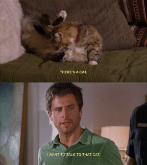 une-petite-souris:Me in any situation with a feline regardless of what else is going on: THERE'S A CAT  E.H.GSS   I WANT TO TALK TO THAT CAT une-petite-souris:Me in any situation with a feline regardless of what else is going on