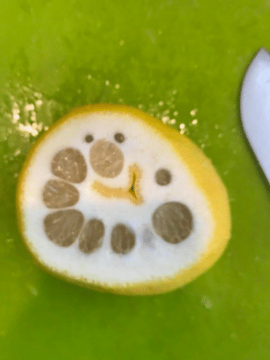 There's a clown in this lemon! https://t.co/JZJVkd8b6x: There's a clown in this lemon! https://t.co/JZJVkd8b6x