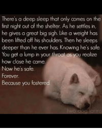 """Memes, Say It, and Best: There's a deep sleep that only comes on the  first night out of the shelter. As he settles in,  he gives a great big sigh. Like a weight has  been lifted off his shoulders. Then he sleeps  deeper than he ever has. Knowing he's safe.  You get a lump in your throat as you realize  how close he came.  Now he's safe.  Forever.  Because you fostered  o dod farms We have all seen """"shelter sleep"""" And trust us when we say, it's one of the best things to witness in the whole world. Adopt, Foster, Volunteer!"""