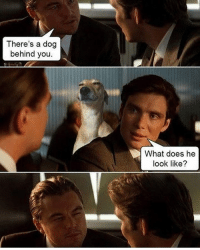 What Does, Dank Memes, and Dog: There's a dog  behind you  What does he  look like? 😑