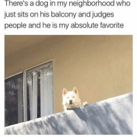 Memes, 🤖, and Dog: There's a dog in my neighborhood who  just sits on his balcony and judges  people and he is my absolute favorite 😂