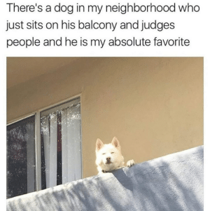 Guilty: There's a dog in my neighborhood who  just sits on his balcony and judges  people and he is my absolute favorite Guilty