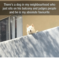 This would be me if I came back as a dog: There's a dog in my neighbourhood who  just sits on his balcony and judges people  and he is my absolute favourite This would be me if I came back as a dog