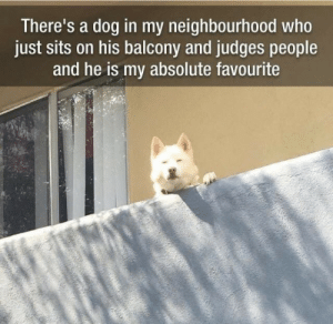 Judges: There's a dog in my neighbourhood who  just sits on his balcony and judges people  and he is my absolute favourite