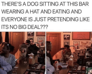 *russian dog eating intensifies*: THERE'S A DOG SITTING AT THIS BAR  WEARING A HAT AND EATING AND  EVERYONE IS JUST PRETENDING LIKE  ITS NO BIG DEAL???  Tots  ALCOHOL!  Hat Dog!  ALCOHOL!  Hat Dog  HOT DOGS *russian dog eating intensifies*