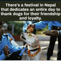 Dogs, Memes, and Nepal: There's a festival in Nepal  that dedicates an entire day to  thank dogs for their friendship  and loyalty. Via @dilutethepower - How it should be.... 🐶🙌🏼 onelove unconditionallove goodvibes awakespiritual