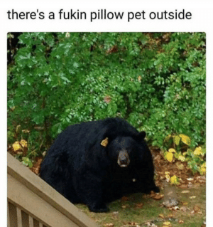 Pet, Bean, and Pillow: there's a fukin pillow pet outside Looks like a bean bag
