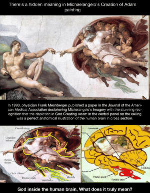 God, Brain, and Cross: There's a hidden meaning in Michaelangelo's Creation of Adam  painting  In 1990, physiclan Frank Meshberger published a paper in the Journal of the Ameri-  can Medical Association deciphering Michelangelo's imagery with the stunning rec-  ognition that the depiction in God Creating Adam in the central panel on the ceiling  was a perfect anatomical illustration of the human brain in cross section.  Central sulcu  Cingilate  Sshian  Opeic chiam  Pinitary sealk  Medulls  Verebral a  Vertebra try  God inside the human brain, What does it truly mean? Is it possible that the painting is actually tells us that human created God in their mind?