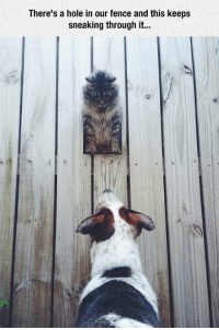 Hole, The Enemy, and Enemy: There's a hole in our fence and this keeps  sneaking through it... <p>Peeking At The Enemy.</p>