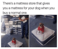 Cute, Lol, and Memes: There's a mattress store that gives  you a mattress for your dog when you  buy a normal one. Lol so cute 😂