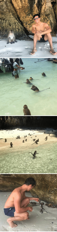 THERES A MONKEY BEACH IN THAILAND THIS IS AMAZING https://t.co/n5YzPz1eD5: THERES A MONKEY BEACH IN THAILAND THIS IS AMAZING https://t.co/n5YzPz1eD5