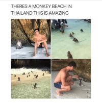 Would you go?: THERES A MONKEY BEACH IN  THAILAND THIS IS AMAZING Would you go?