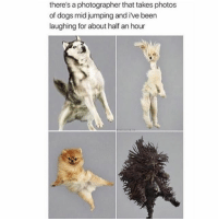 Follow me @antisocialtv @lola_the_ladypug @x__social_butterfly__x @x__antisocial_butterfly__x: there's a photographer that takes photos  of dogs mid jumping and i've been  laughing for about half an hour Follow me @antisocialtv @lola_the_ladypug @x__social_butterfly__x @x__antisocial_butterfly__x