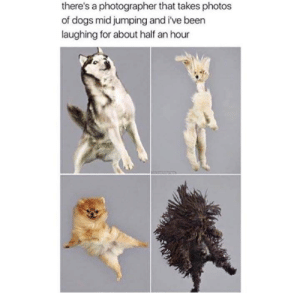Dogs, Been, and Photos: there's a photographer that takes photos  of dogs mid jumping and i've been  laughing for about half an hour