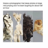 Memes, Drawings, and Jumped: theres a photographer that takes photos ot dogs  mid jumping and i've been laughing for about half  an hour why can't i just draw whatever i want in drawing class