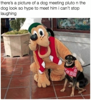 Always meet your heroes: there's a picture of a dog meeting pluto n the  dog look so hype to meet him i can't stop  laughing Always meet your heroes