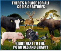 God, Memes, and Potato: THERE'S A PLACE FOR ALL  GOD'S CREATURES..  RIGHT NEXT TO THE  POTATOES AND GRAVY!